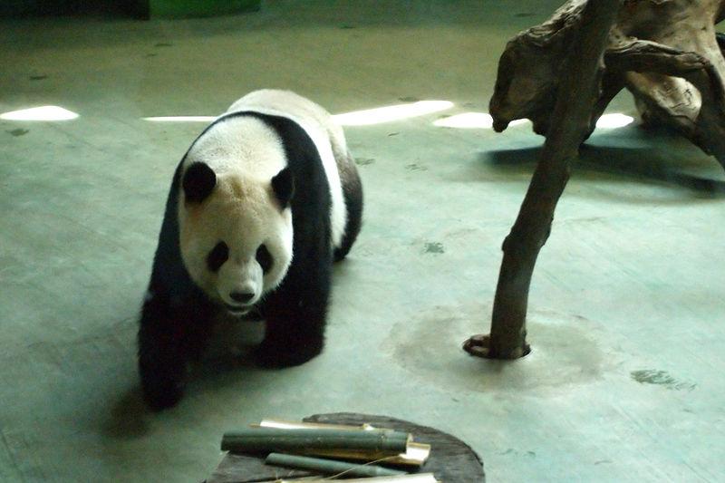 Taipei Zoo