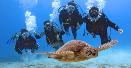 Certified Divers with Turtle