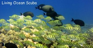 hanauma-bay-outer-reef