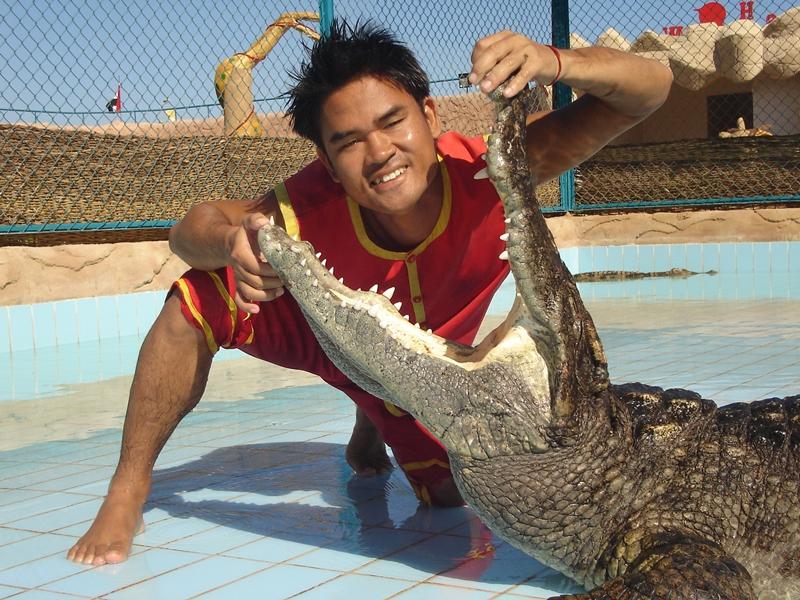crocodile shows