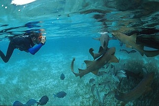 Ambergris Caye scuba diving