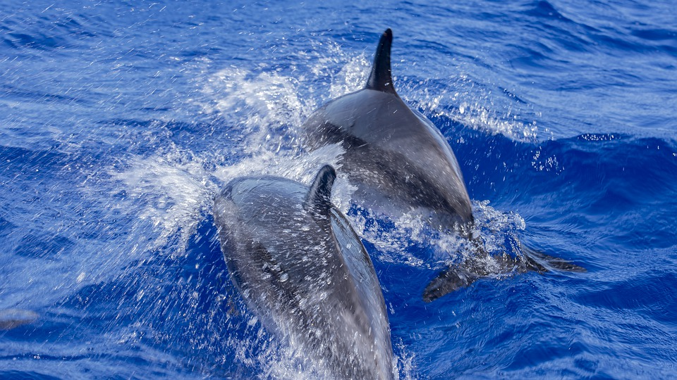 Dolphin Watching at Algarve